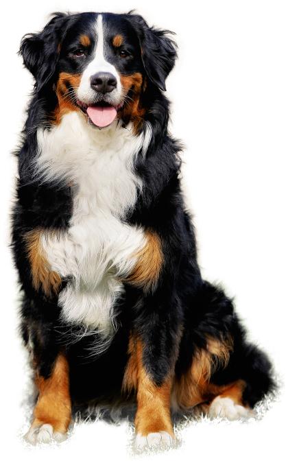смерть от глистов у собак