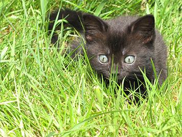 Лужайка для котенка