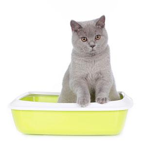 Кот все метит и орет