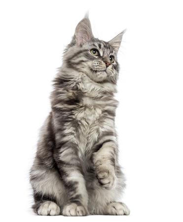 Как избавиться от того что кот метит территорию