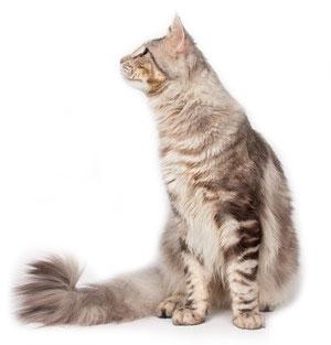 Коты метят спермой