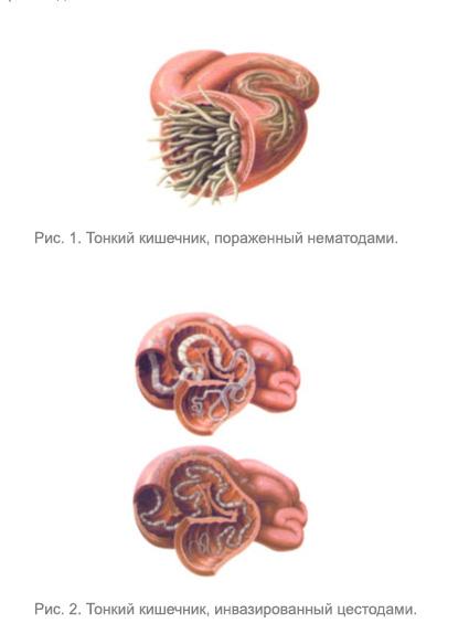 во внутренние органы