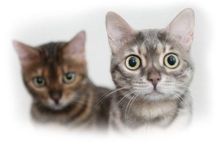 Кошку сводить с котом в первый раз
