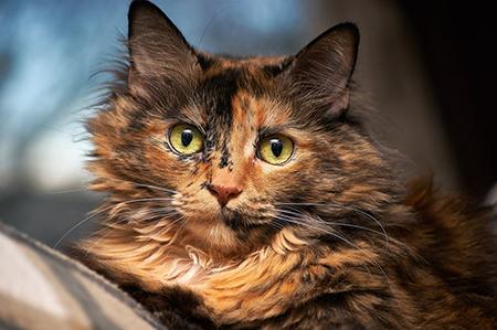 Секс и роды у кошек