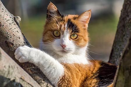 картинки для кошек