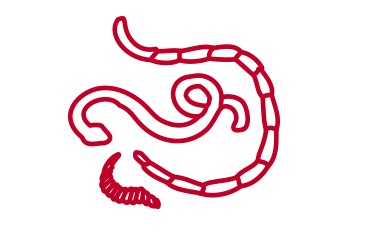 сердечные паразиты у человека