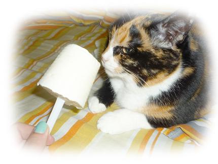 мороженое для кошек