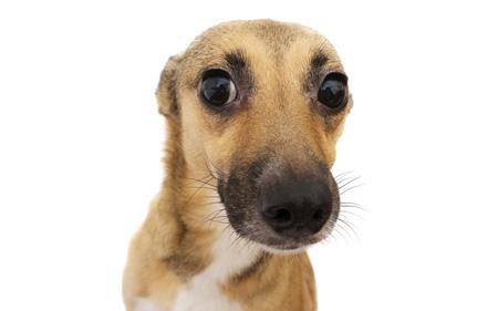 Подробная инструкция как отучить собаку писать и гадить дома 1